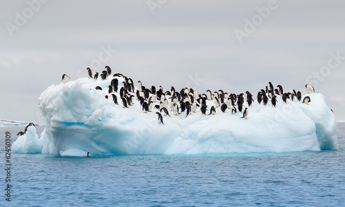 Foto op Canvas Antarctica Adult adele penguins grouped on iceberg