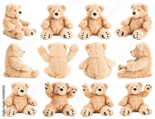 Fotomural Teddy bear in different positions