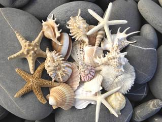 Panel Szklany Podświetlane Do Spa still life with starfish, pebbles and shells