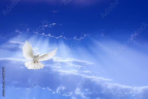 Valokuva  White dove flying in the sky