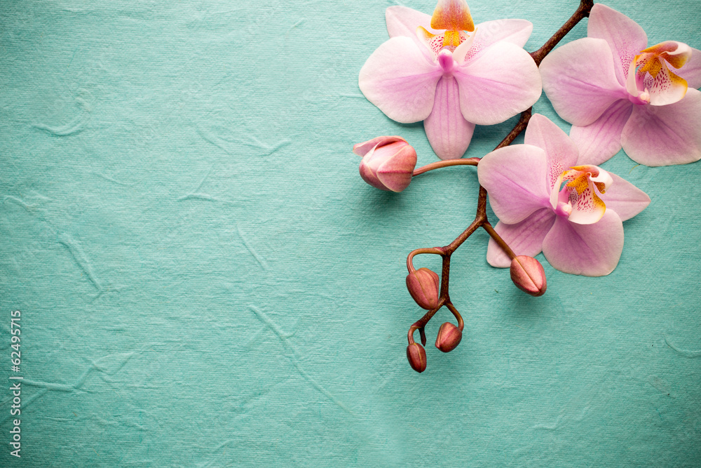 Fototapety, obrazy: Orchidea na zielonym tle