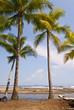 Palms on a Pacific Beach