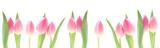 Fototapeta Tulipany - Banner - Pink Tulips