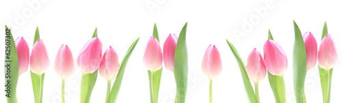 baner-rozowe-tulipany