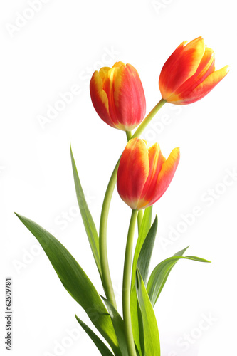 Photo  Bouquet of tulips