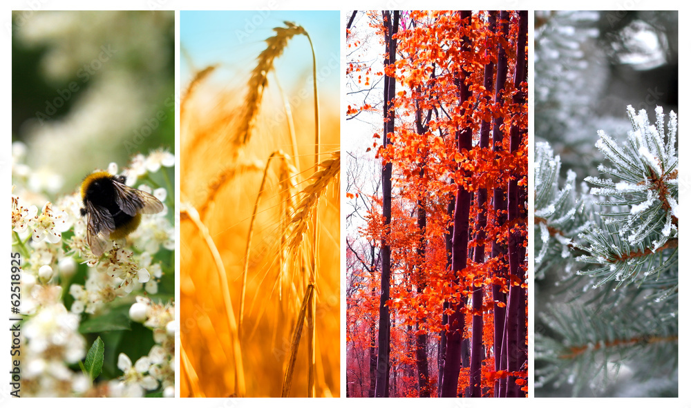 Fototapety, obrazy: Four seasons: Spring, summer, autumn and winter