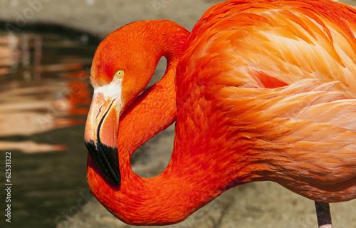 Papiers peints Flamingo Flamingo