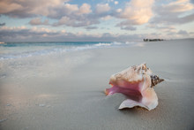 Caribbean Conch And Beach
