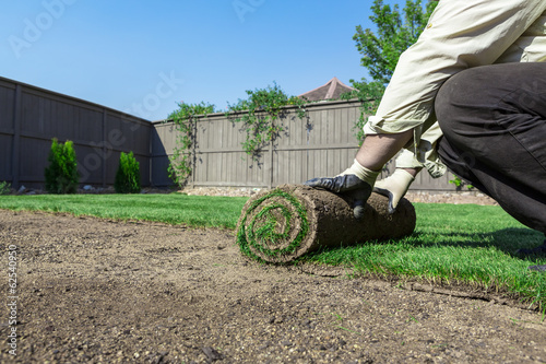 Fotografie, Obraz  Installing new lawn