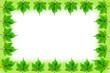 Frame green leaf