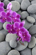 branch pink orchid with pebbles