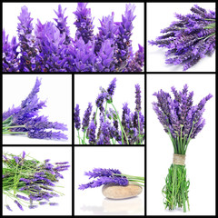 Obraz na Szkle Lawenda lavender flowers collage