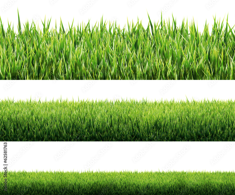 Fototapety, obrazy: grass isolated