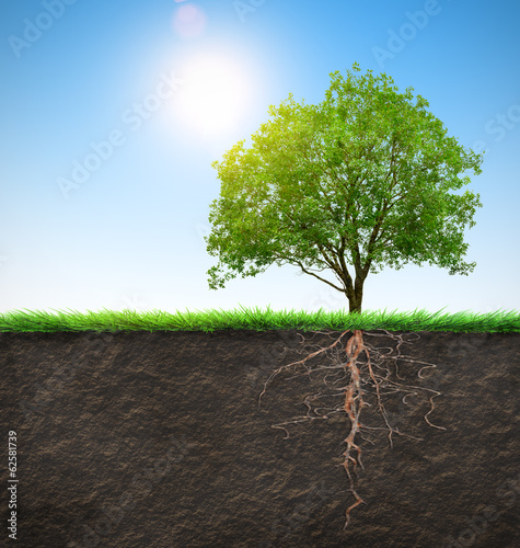 tree with roots Wallpaper Mural
