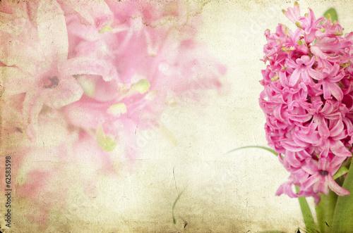 Vintage pink hyacinth