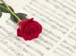 Rose laying on sheet music