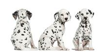 Dalmatian Puppies Sitting Toge...