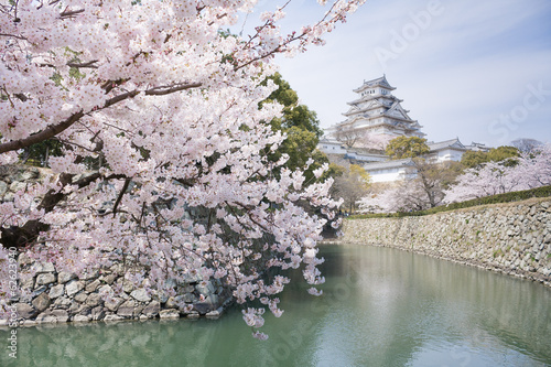 Japanese cherry blossoms and castle in spring
