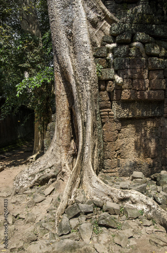 фотография  Angkor Wat - Indianer Jones | Tomb Raider Tempel