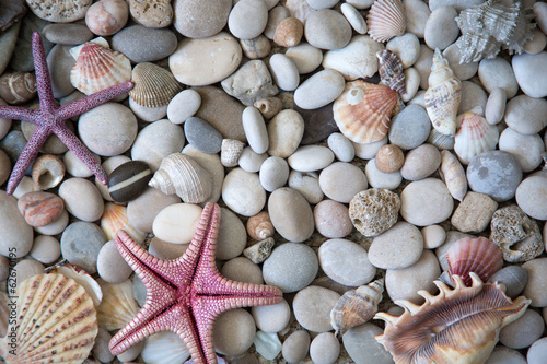 obraz PCV Piękny egzotyczny muszli i kamieni