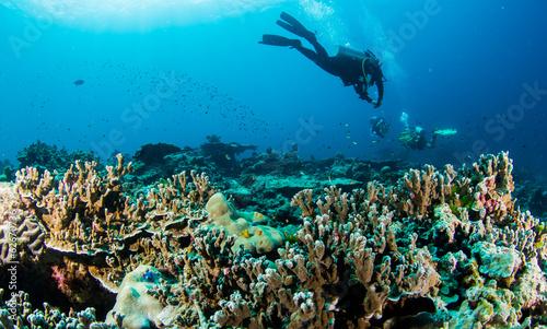 fototapeta na lodówkę reef4