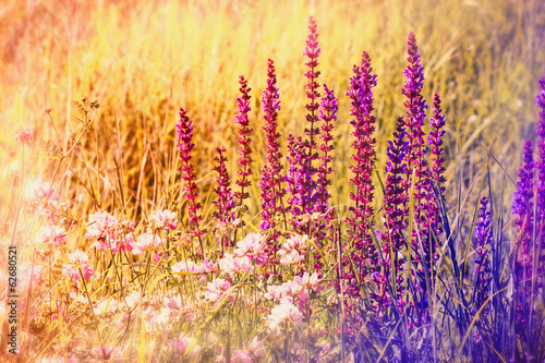 fioletowy-kwiat-na-wiosne