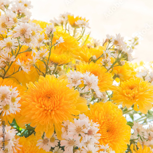 Fototapety, obrazy: Bouquet of Yellow Gerbera Daisy