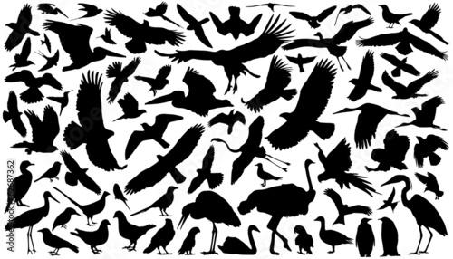 Fototapeta premium birds silhouettes