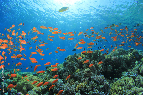 Photo sur Aluminium Sous-marin Fish and Coral Reef underwater