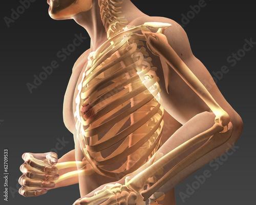 Fotografie, Obraz  Corpo umano trasparente
