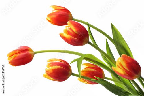 Crédence de cuisine en verre imprimé Tulip Bouquet of tulips