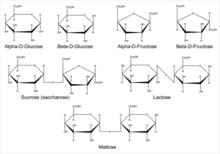 Structural Formulas Of The Main Saccharides