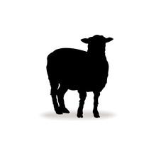 Form Contour Sheep, Lamb