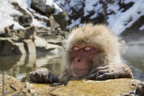 Foto op Plexiglas Aap Japanese snow monkey in a hot spring.