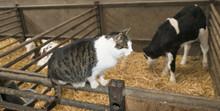 Animals In A Barn On A Farm