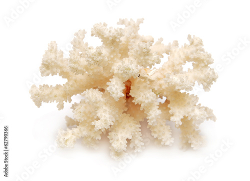 Door stickers Under water Coral