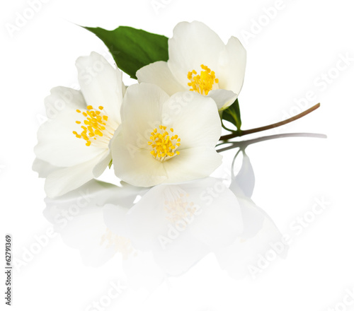 Photographie Jasmine