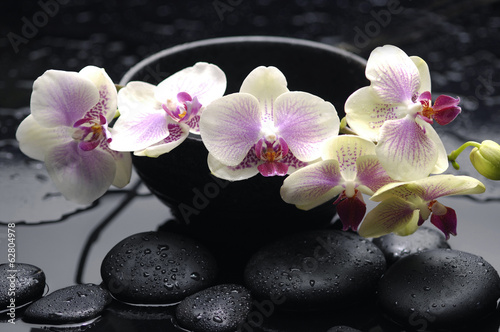 spa concept –branch yellow orchid in bowl with stones