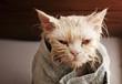 Leinwanddruck Bild - Wet cat