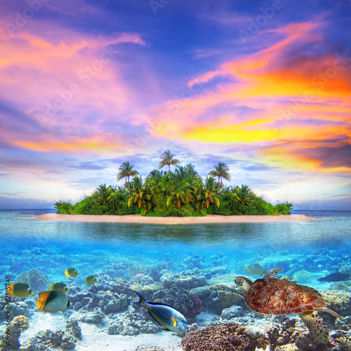 Fotografie, Obraz  Tropical island of Maldives with marine life