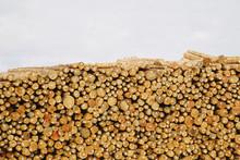 Stacks Of Freshly Cut Logs