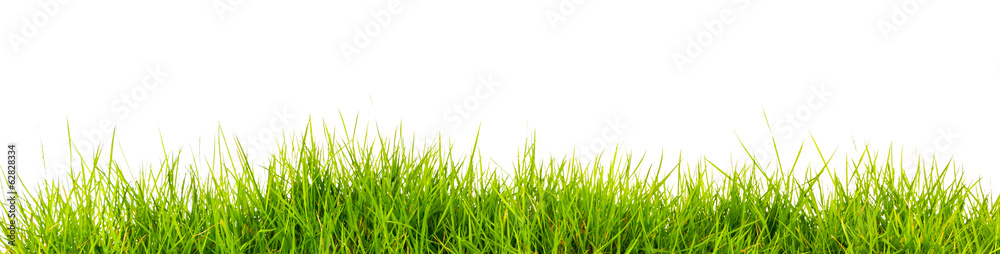 Fototapety, obrazy: Fresh spring green grass with soil isolated on white background.