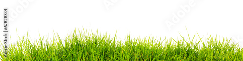 Fototapeta Fresh spring green grass with soil isolated on white background. obraz