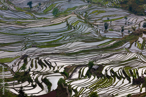 Fotobehang Rijstvelden Terraced rice fields, Yuanyang, China