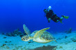 canvas print picture - Sea Turtle and Scuba Diver