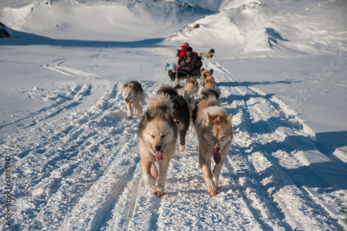 Fotobehang Poolcirkel Dog sledding in Tasiilaq, East Greenland
