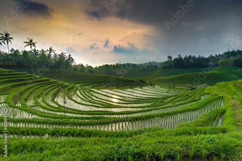 Foto op Plexiglas Indonesië Sunset above the rice-field 2