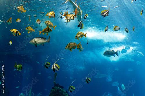 fototapeta na drzwi i meble Kolorowe ryby