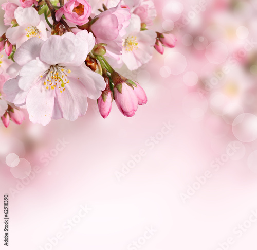 Poster Bloemenwinkel Spring flowers background with pink blossom