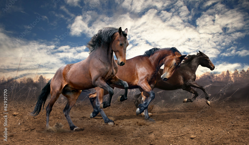 Fototapeta wild jump bay horses